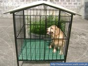 DOG CAGE (HEAVY DUTY) BRAND NEW